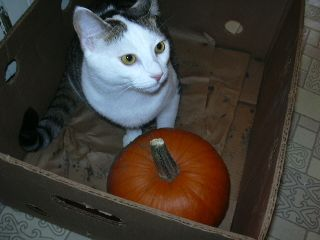 Freya annexing the pumpkin pen
