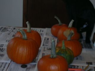 Edda inspecting the washed pumpkins